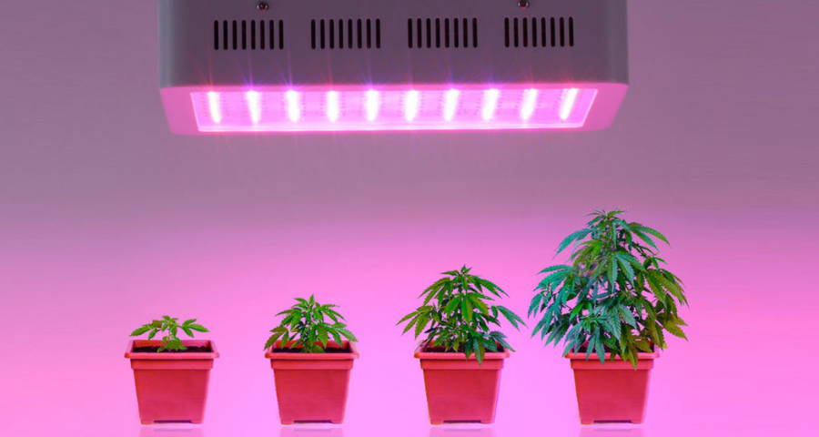 Recomendaciones para cultivar Marihuana con luces LED