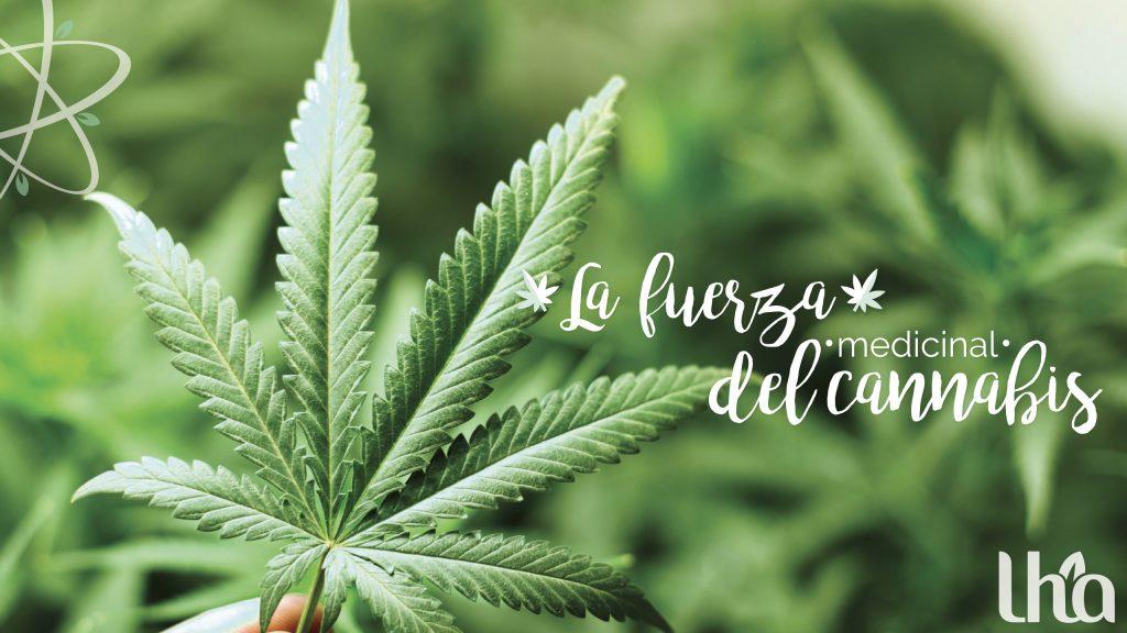 La Marihuana ayuda o daña el Sistema Inmunitario
