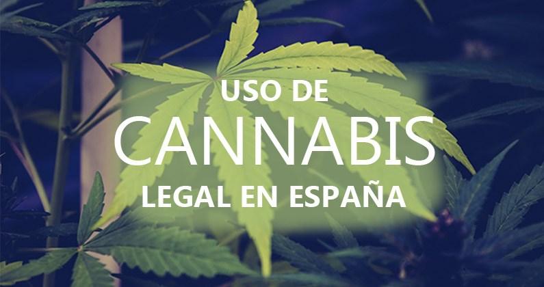 Marihuana donde es legal ¿Cómo son las leyes de está en España?