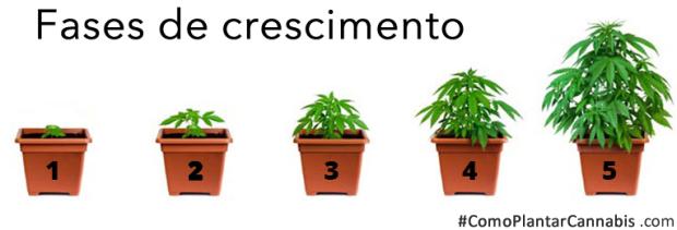 Cuándo y Cómo debes trasplantar una Planta de Marihuana