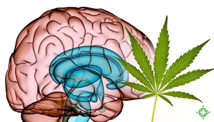 Marihuana en el Sistema Nervioso Beneficios Neurológicos
