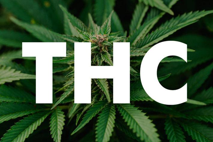 ¿Cómo funciona la Marihuana en nuestro organismo?