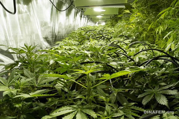 Qué tanto afecta un Cultivo Interior de Marihuana el medio ambiente