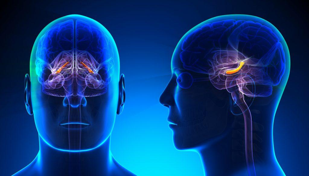 Cómo el THC afecta el aprendizaje y la memoria a diferentes edades