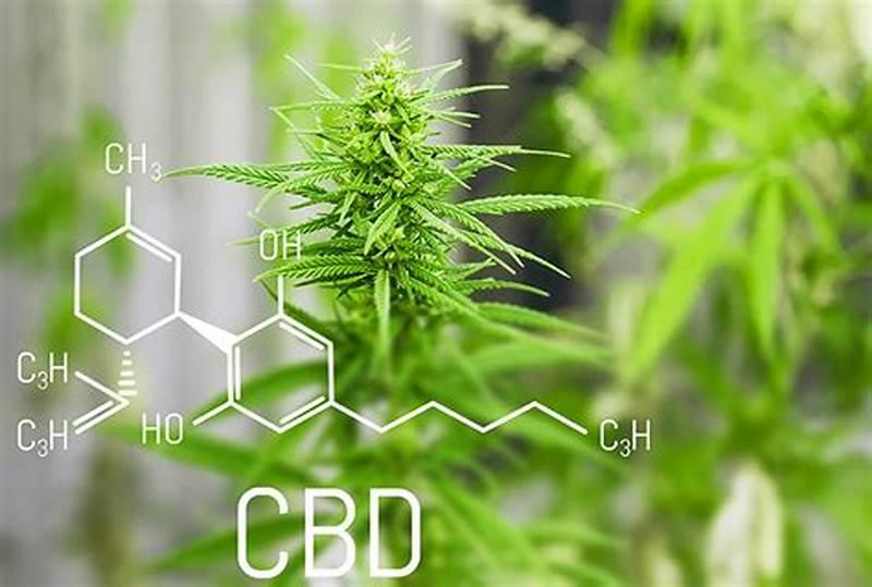 Los Mitos más comunes sobre el Cannabis