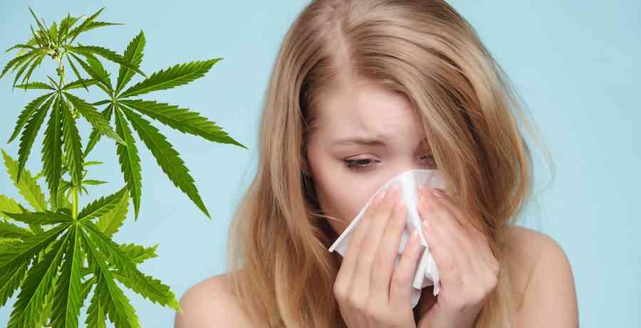 Alergia al Cannabis