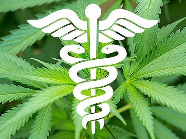 Marihuana La Planta Medicinal