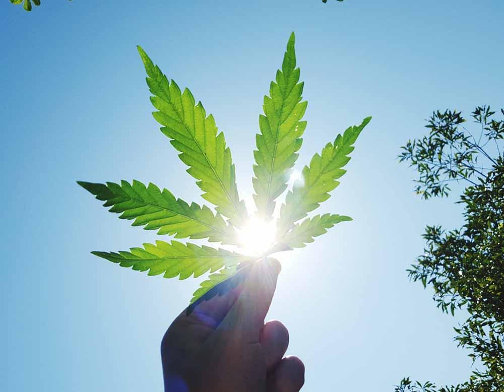 ¿El cannabis es adictivo?