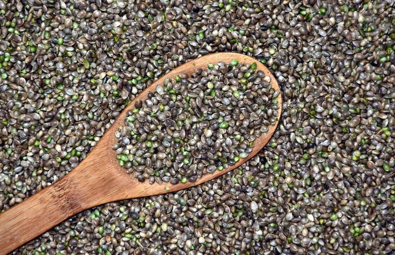 Cultivar Semillas de Marihuana de Calidad.