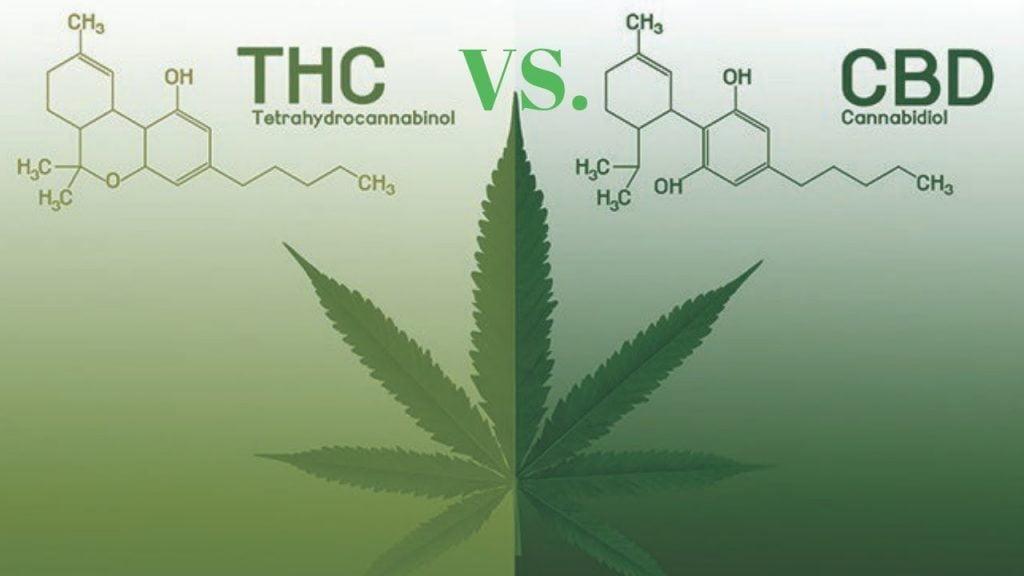 CBD vs. THC Cuál es la diferencia