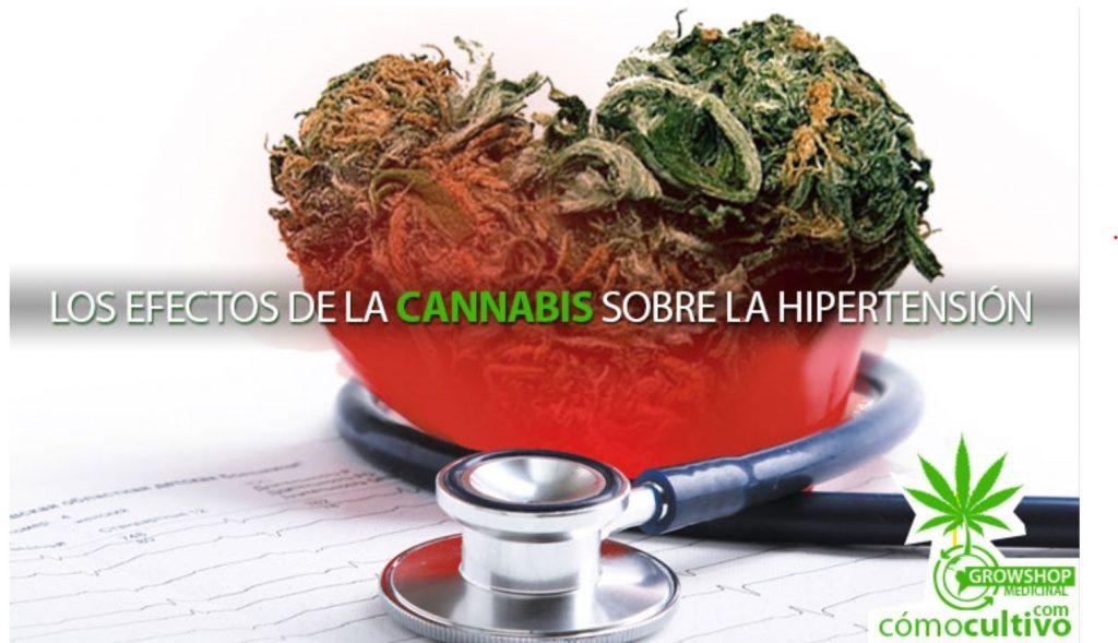 La Marihuana en la Presión Arterial