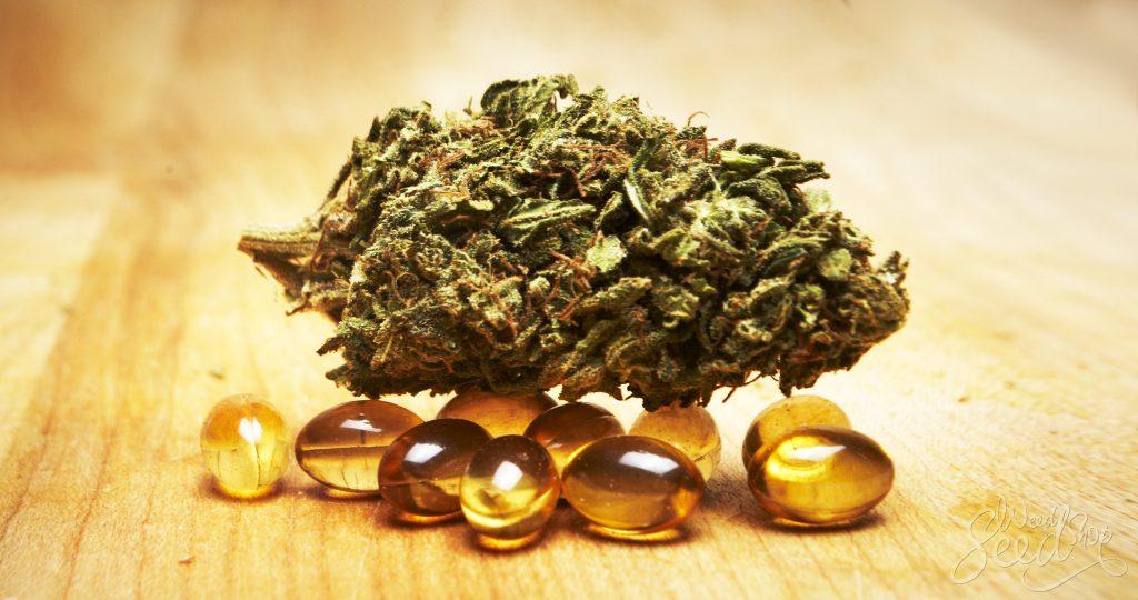 Cómo hacer tus propias cápsulas con aceite de coco e infusión de cannabis