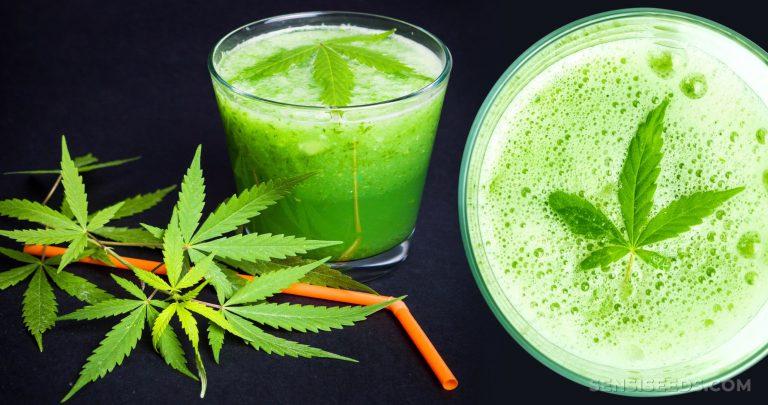 Jugos verdes con cannabis: Beneficios, recetas y dietas