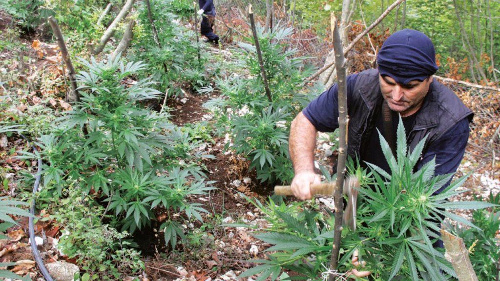 Desde Albania, la mayor ruta de tráfico de Marihuana en Europa