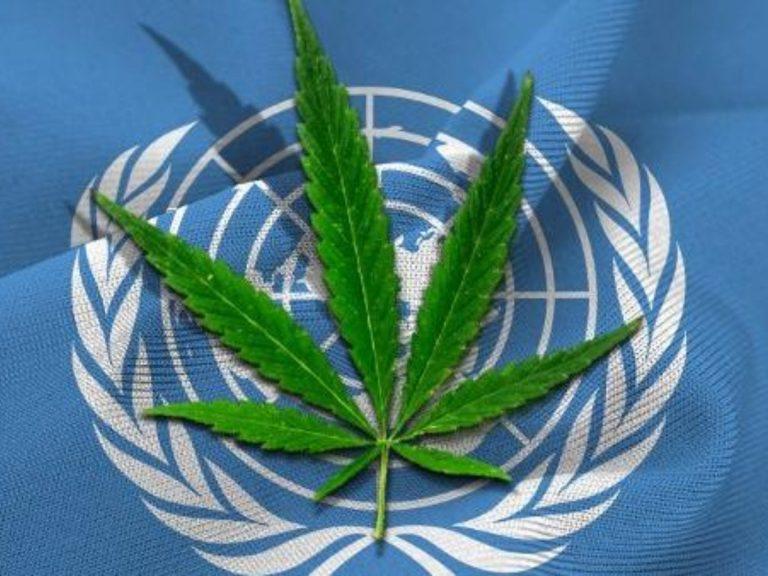 ONU reconoce que la Marihuana tiene propiedades medicinales