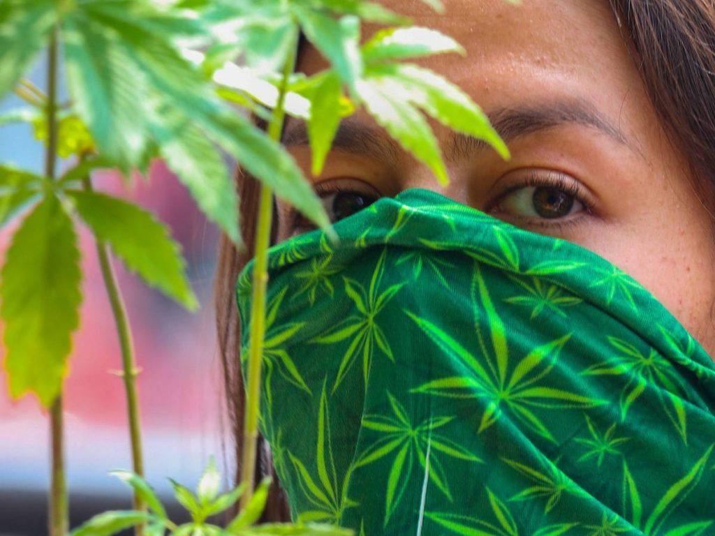 México seria un país líder en la industria de la marihuana a nivel global